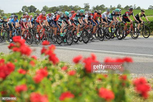 The peleton passes Main road in McLaren Vale during stage five of the 2018 Tour Down Under on January 20 2018 in Adelaide Australia