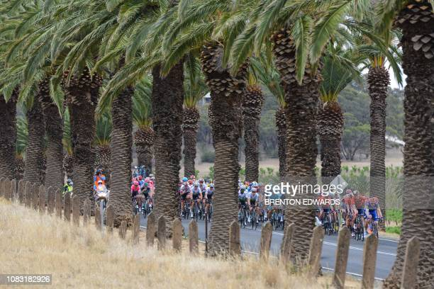 The peleton rides through Seppeltsfield in the Barossa Valley during stage two of the Tour Down Under cycling race in Adelaide on January 16, 2019.