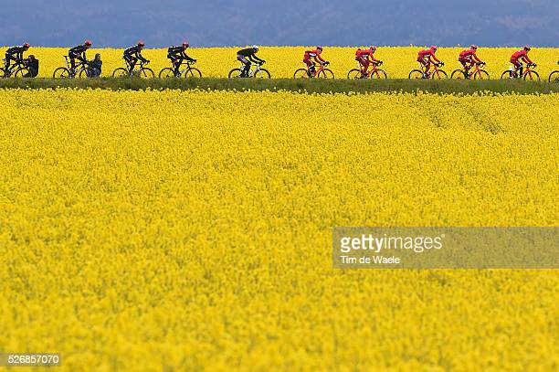 The peloton cruising trough a yellow flower corn field during stage 5 of the Tour de Romandie on May 1 2016 in Geneva Switzerland