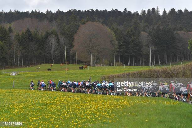 The Peloton during the 74th Tour De Romandie 2021, Stage 2 a 165,7km stage from La Neuveville to Saint-Imier / Landscape / Cows / #TDR2021 /...