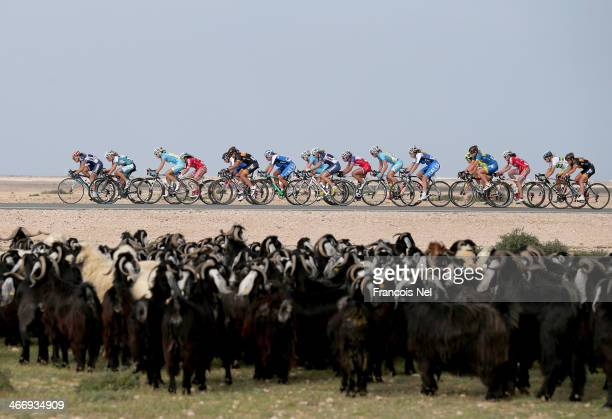 The peloton make their way through Al Mazzara during stage two of the 2014 Ladies Tour of Qatar from Al Zubara to Madinat Al Shamal on February 5,...