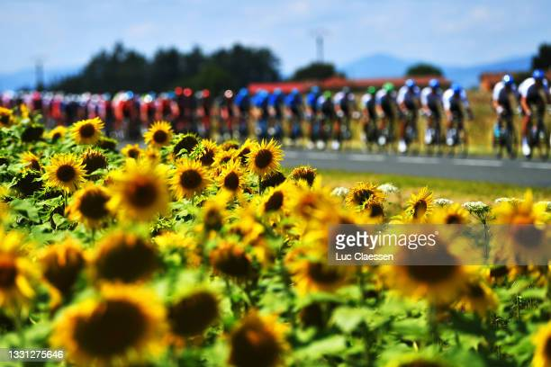 The Peloton passing through a sunflowers field during the 33rd Tour de l'Ain 2021, Stage 1 a 139,1km stage from Parc des Oiseaux to Bourg-en-Bresse...