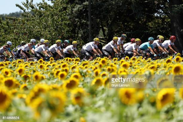 The peloton ride past a field of sunflowers during stage 14 of the Le Tour de France 2017 a 181km stage from Blagnac to Rodez on July 15 2017 in...