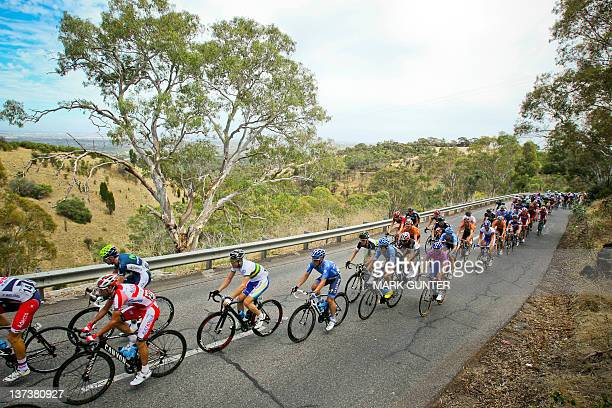 The peloton ride past gum trees during stage 4 of the 2012 Tour Down Under on January 20 2012 The cycling's World Tour is held over six stages from...