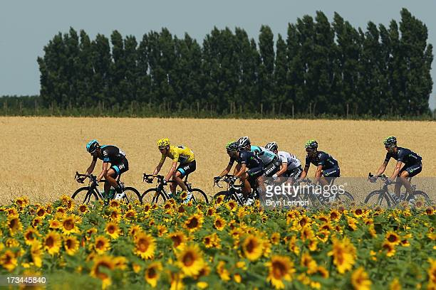 The peloton rides past a field of sunflowers during stage fifteen of the 2013 Tour de France a 2425KM road stage from Givors to Mont Ventoux on July...