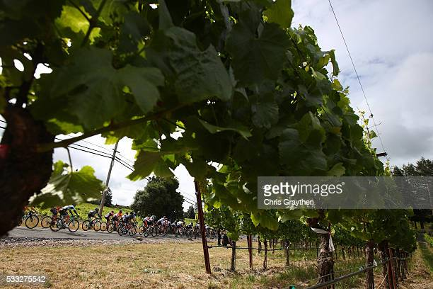 The peloton rides past a wine vinyard during the sage two team time trial of the Amgen Breakaway from Heart Disease Women's Race on May 20, 2016 in...