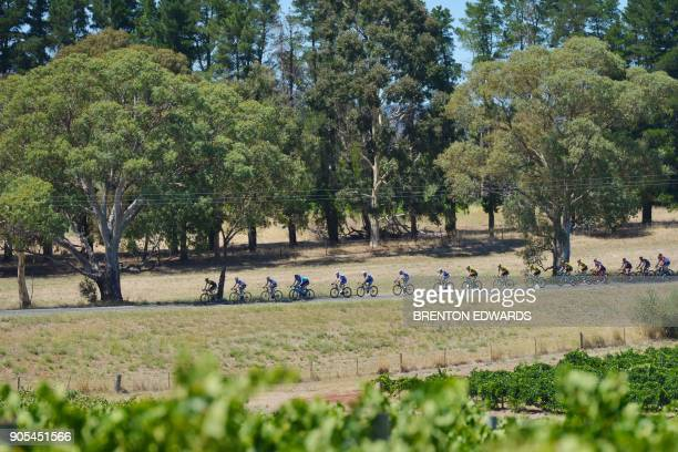 The peloton rides past Barossa Valley vineyards on the first day of the Tour Down Under cycling race in Adelaide on January 16, 2018. / AFP PHOTO /...