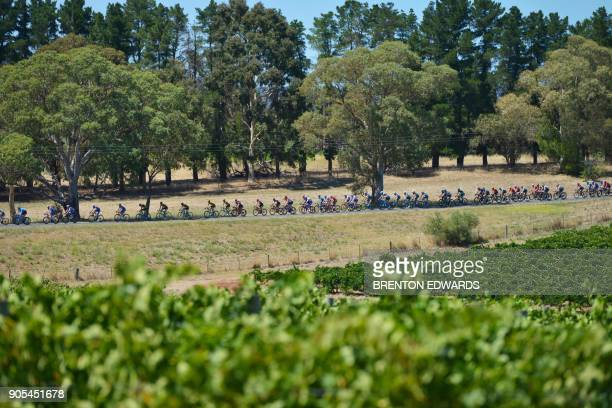 TOPSHOT The peloton rides past Barossa Valley vineyards on the first day of the Tour Down Under cycling race in Adelaide on January 16 2018 / AFP...