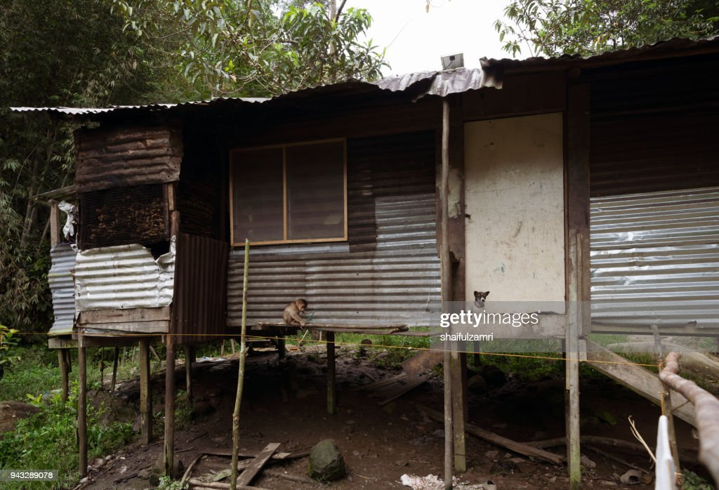 The Penan hut reflects the simplicity of the Penan tribe that lives in the forest of Sarawak. Normally, its made from timber, rattan, leaf and bamboo from the forest. : Stock Photo