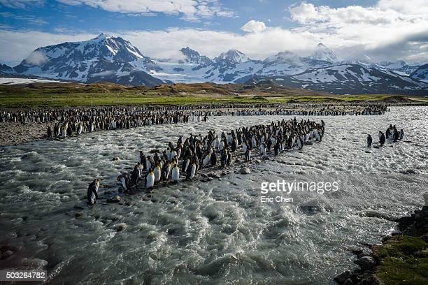 The penguin ark