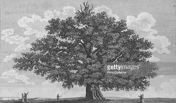 The Penshurst Oak' 1794 The Sidney Oak Penhurst Place England was reputed to have been planted at the christening of Sir Philip Sidney in 1554 it is...