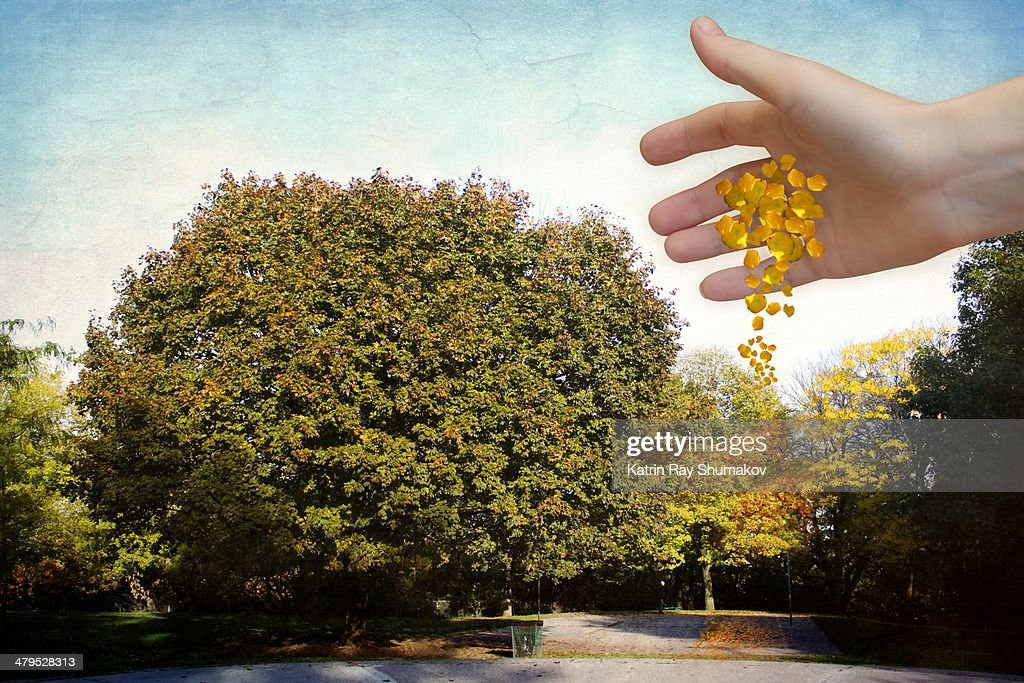 The Perfect Maple With Autumn Spells : Stock Photo