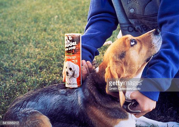 The pet beagle depicted here was being treated with a flea and tick powder which would kill any fleas or ticks on the pet but not harm the dog 1993...