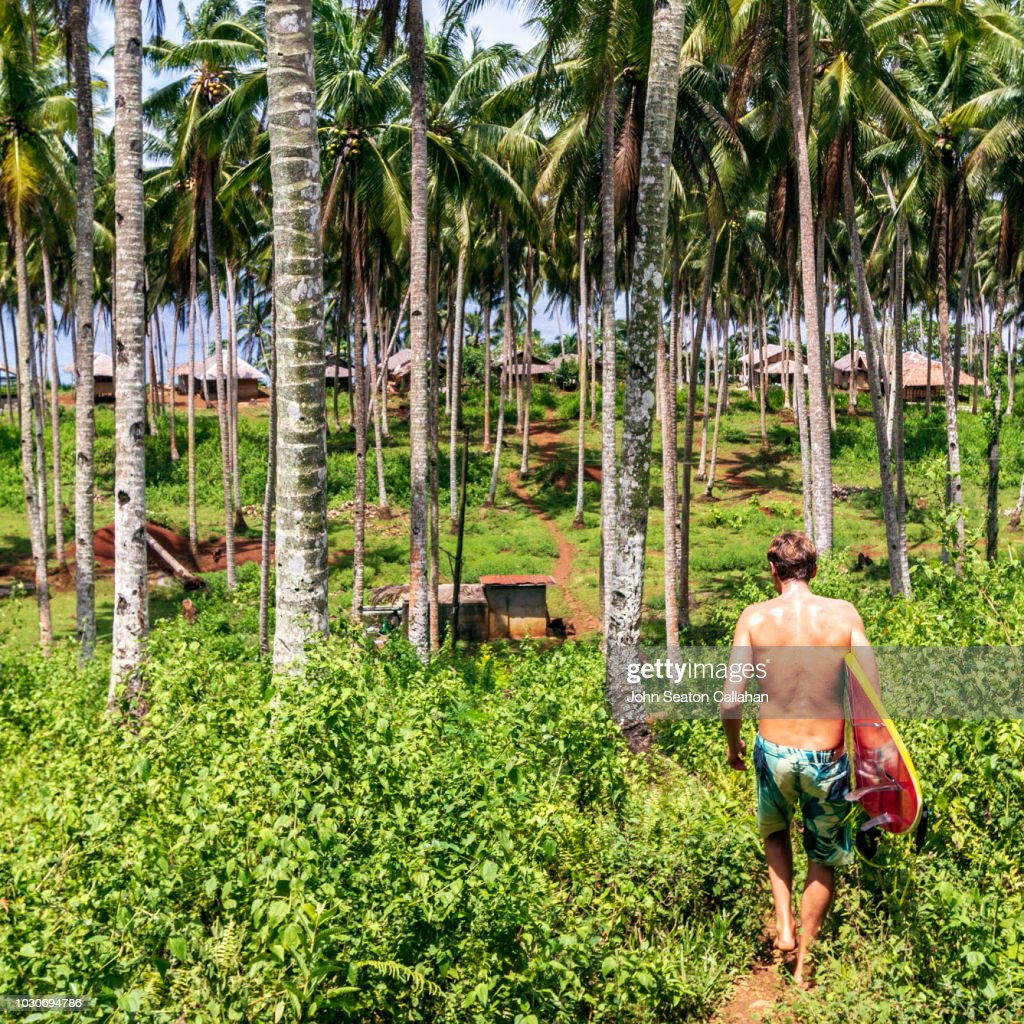 the philippines coconut palms in mindanao ストックフォト getty images