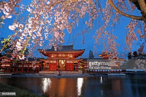 The Phoenix Hall of Byodo-in Temple is illuminated on April 4, 2018 in Uji, Kyoto, Japan.