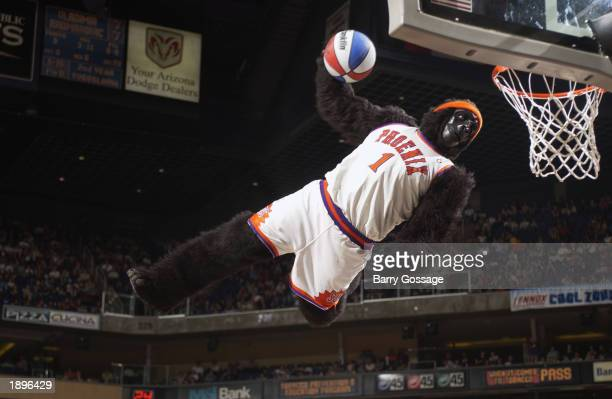The Phoenix Suns mascot Gorilla dunks during an intermission in the game against the Seattle Sonics at America West Arena on March 24 2003 in Phoenix...