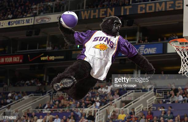 The Phoenix Suns mascot Gorilla dunks during the game against the Chicago Bulls at America West Arena on February 3 2003 in Phoenix Arizona The Suns...