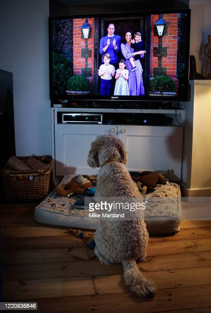LONDON ENGLAND APRIL 23 The photographer's dog Arthur watches Prince William Duke of Cambridge Catherine Duchess of Cambridge Prince George of...