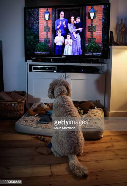 The photographer's dog, Arthur, watches Prince William, Duke of Cambridge, Catherine Duchess of Cambridge, Prince George of Cambridge, Princess...