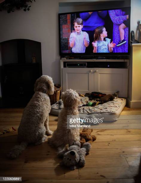 The photographer's dogs Arthur and Ralph watch Prince George of Cambridge and Princess Charlotte of Cambridge clap for NHS carers on television...