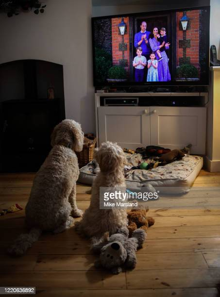 The photographer's dogs, Arthur and Ralph, watch Prince William, Duke of Cambridge, Catherine Duchess of Cambridge, Prince George of Cambridge,...