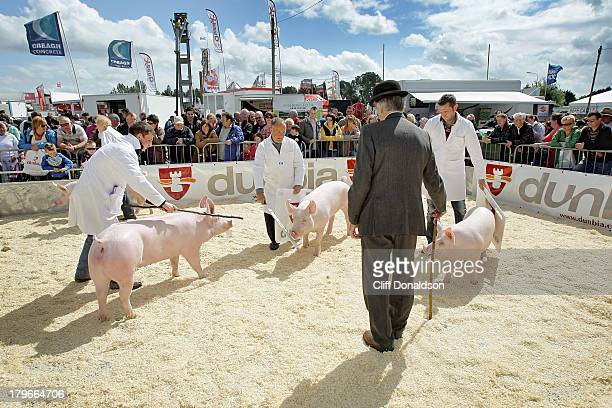 The Pig Judge - A bowler-hat wearing judge chooses the winning animals at the annual Balmoral Show in Belfast, Northern Ireland's main agricultural...