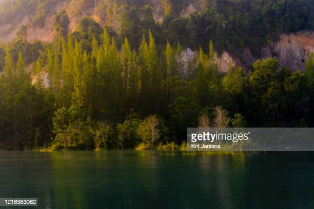 the pine forest and the pond - chana eden bildbanksfoton och bilder
