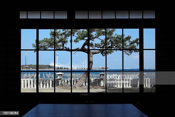 the pine tree over the window - 和室 ストックフォトと画像