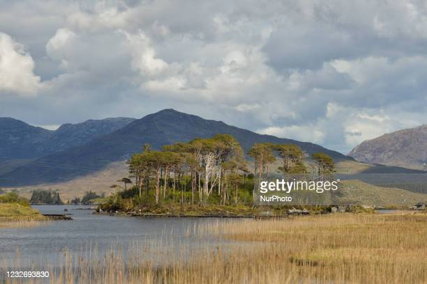 The Pines island of Derryclare Lake located about 20 km east of Clifden, Connemara, on the N59 Galway Road. On Saturday, 1 May 2021, in Roundstone,...