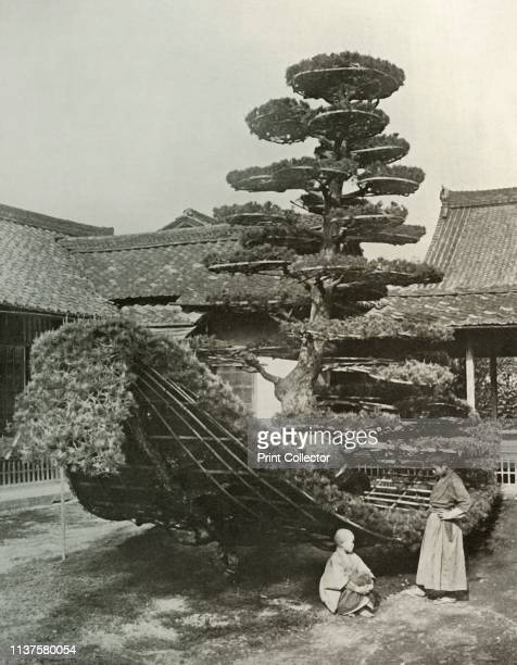 "The Pine-Tree Junk at Kinkakuji', 1910. From ""In Lotus-Land Japan"", by Herbert G. Ponting, F.R.G.S. [Macmillan and Co., Limited, London, 1910] Artist..."