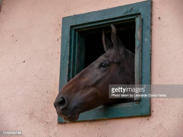 the pink and green stable - leonardo costa farias - fotografias e filmes do acervo