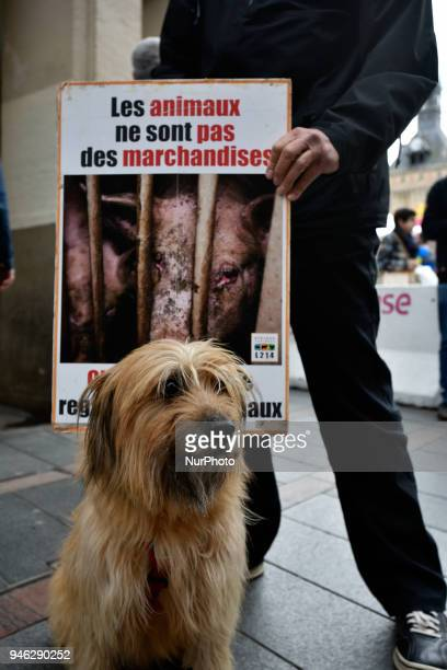 The placard reads 'Animpals aren't merchandises' Members of the association L214 made an action for a new film depicting in a pig livestock farm in...
