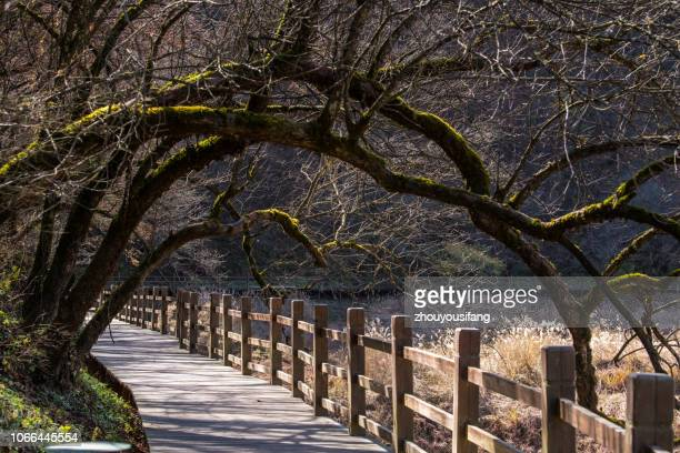 the plank road of the shennongjia national forest park, hubei, china - china execution stock pictures, royalty-free photos & images