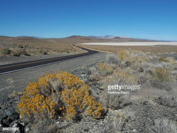 The Playa Salt Basin, Black Rock Desert, Nevada