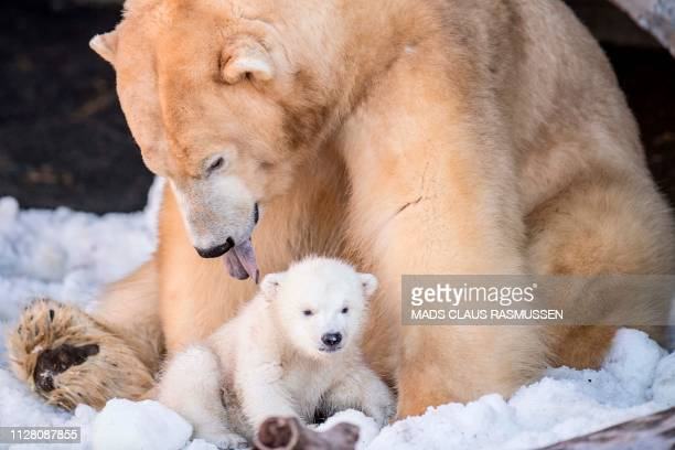 The polar bear cub in the Copenhagen Zoo comes outside for the first time on February 28 2019 / Denmark OUT
