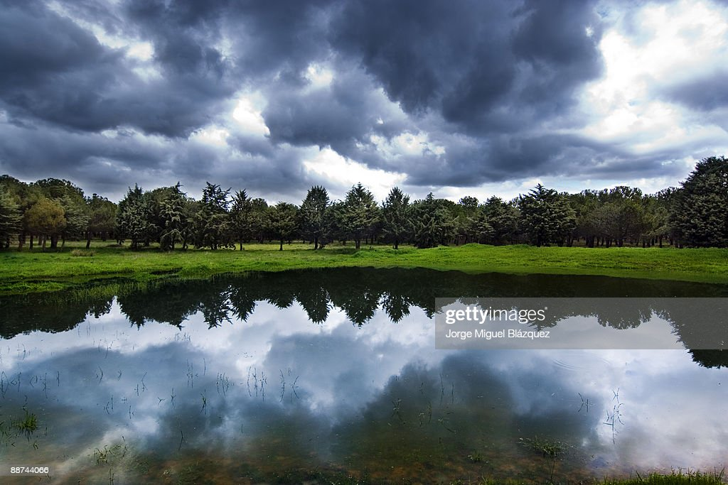 The Pond : Foto de stock