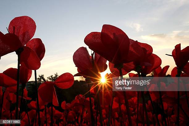 The Poppy Project on display at The Skillion Terrigal as a tribute to Anzac Day on April 21 2016 in Sydney Australia The handmade flowers are part of...