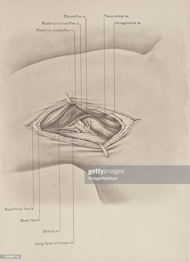 Asombroso Anatomía Y Fisiología Mcgraw Colina Fotos - Imágenes de ...