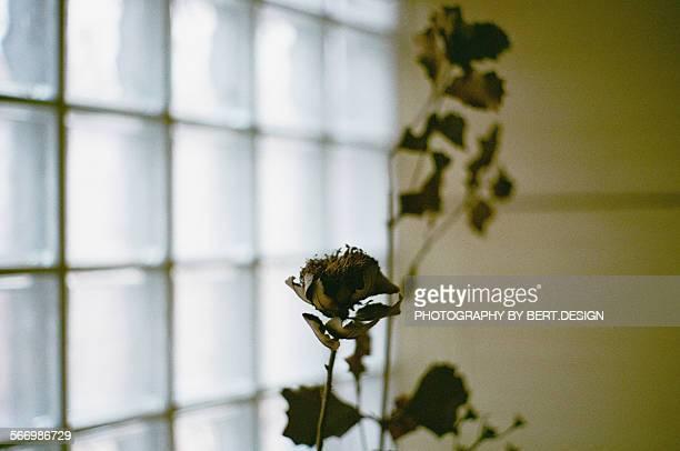 The potpourri flower
