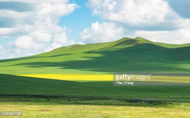 the prairie in the sunshine - terreno coberto de grama - fotografias e filmes do acervo