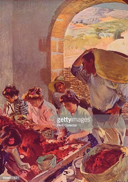 The Preparation of Dry Grapes From Modern Art by Charles Marriott Tis Tis [Colour Ltd London 1909] Artist Joaquin Sorolla y Bastida