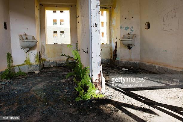 The Presidio Modelo built around 1930 is an abandoned prison outside of Nueva Gerona on the Isla de la Juventud Weeds grow through cracks in the...