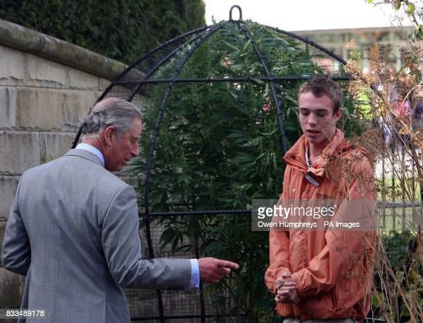 The Prince of Wales inspects the cannabis plants with guide Aaron Oliver in the poison garden at Alnwick Castle today in Northumberland.