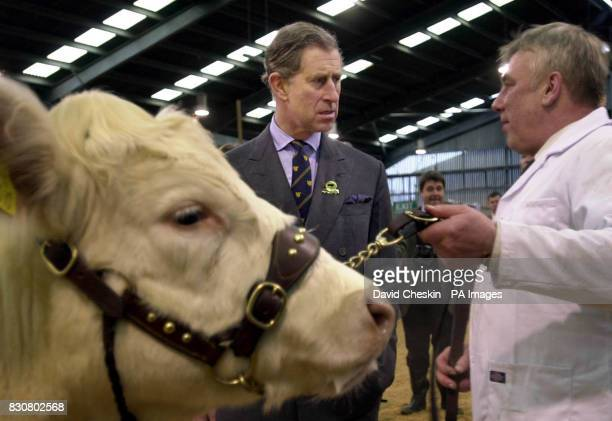 The Prince of Wales known as the Duke of Rothesay in Scotland talks to Rob McWalter from Fort William with his Shorthorn cow during his visit to the...