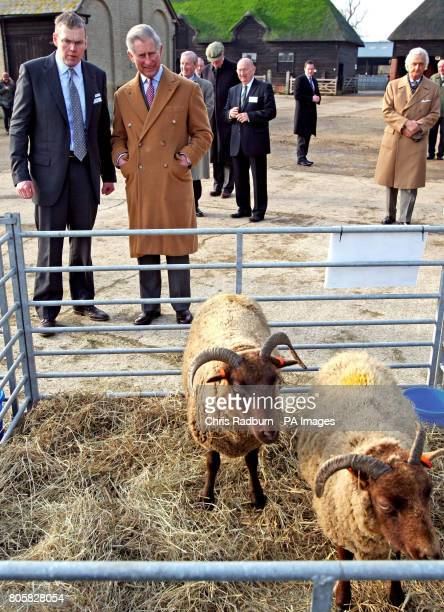 The Prince of Wales looks at sheep during at visit to Wimpole Hall Farm in Arrington Cambridgeshire during his visit Prince Charles launched The Wool...