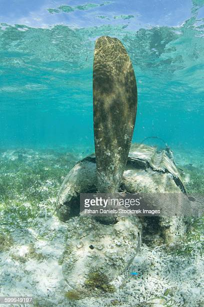 The propeller of a Japanese Zero fighter on a shallow reef in Palau.