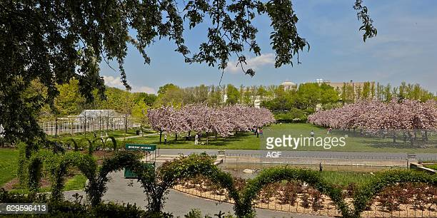 The Prospect Heights Park in Brooklyn and Its Lanes of Cherry Blossom Trees in Spring