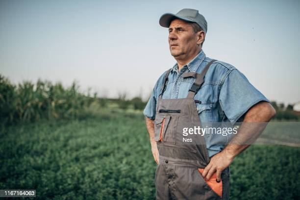 the proud farmer stands in a field - soybean harvest stock pictures, royalty-free photos & images