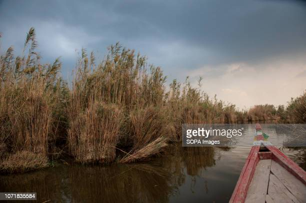 The prow of a traditional canoe seen entering the central marsh of southern Iraq. Climate change, dam building in Turkey and internal water...