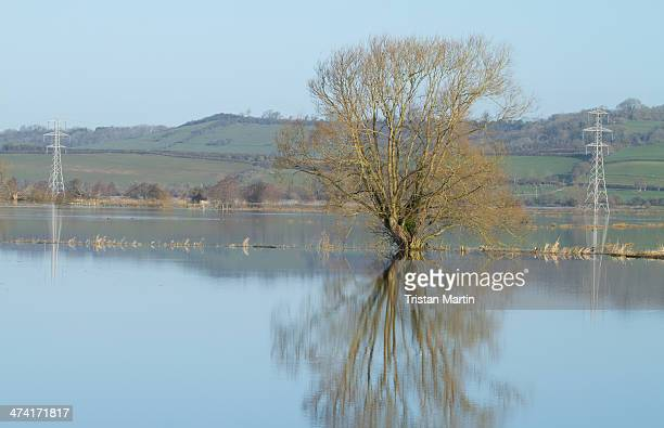The pylons carrying powerlines across the Somerset Levels are submerged in floodwater near RSPB Greylake Nature Reserve. Large areas of the Somerset...